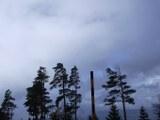 Dunkle kahle Bäume im Nebel