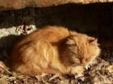 rote Katze entspannt