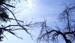 Tote Bäume, schwarze Äste