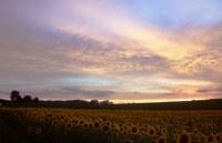 Leuchtende Wolken, Diefenbach