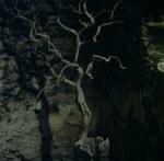 beleuchteter Baum in der Nacht