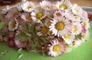 Gänseblumen-Krone 11-04-06