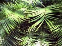 Im Palmengarten Frankfurt/Main