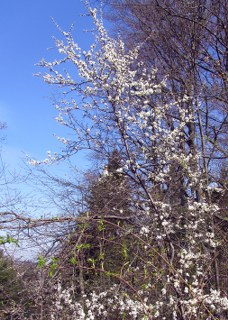 Frühling-2012