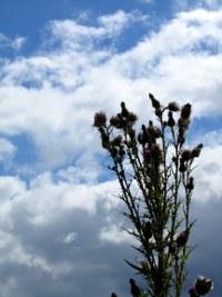sommerwolken-05_200x267