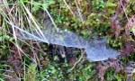 spinnennetz-12_150x90
