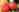 erdbeeren-september2014-01-klein_Kopie